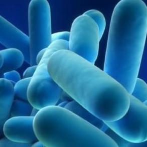 Legionella Checks: Reducing The Risks in Washrooms